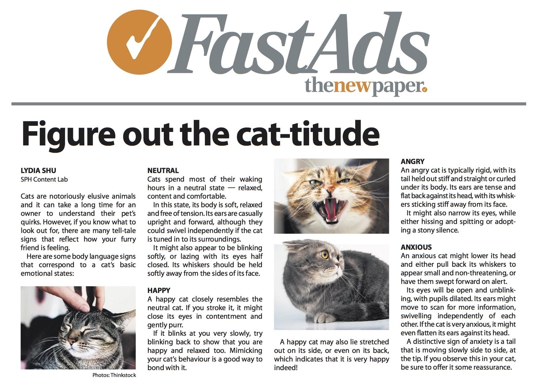 3. TNP Cat-titude Filler